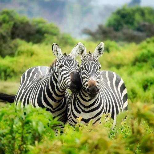 kenya-1883654.jpg